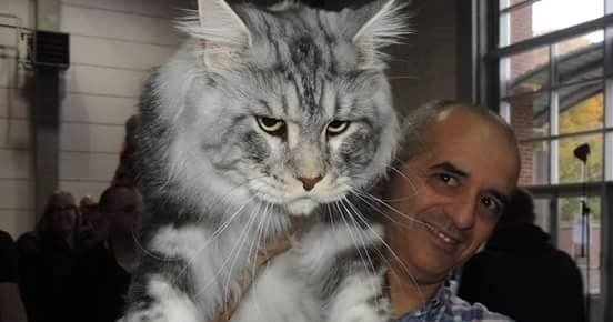 Cat Dd For Sale In Australia